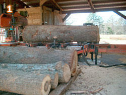 Logs in place for cutting.